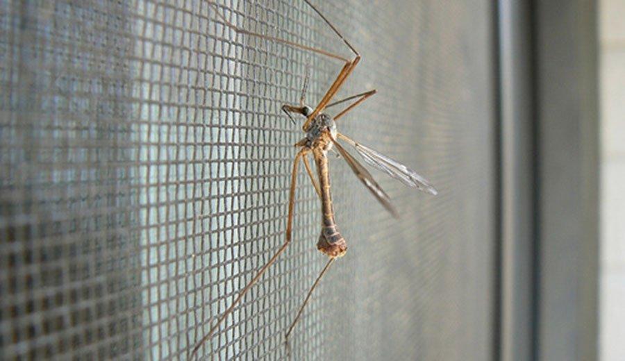 Как избавиться от комаров в квартире, доме или подвале