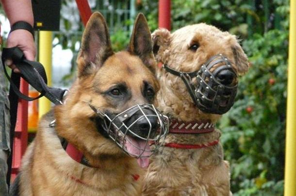 выгул собак законодательство